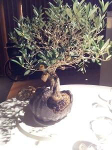 ECCR Appetizer  (2) Olive Tree
