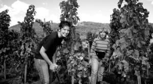 Colombo wines (2)