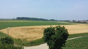 Pajottenland landscape (2)