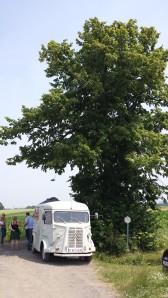 Witse tree