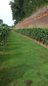 CLos wijngaard 1