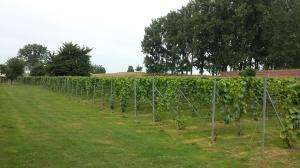 Clos wijngaard 3