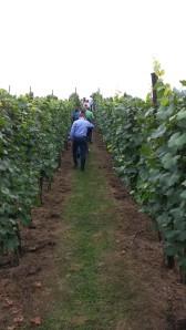 Hoenshof vines 1