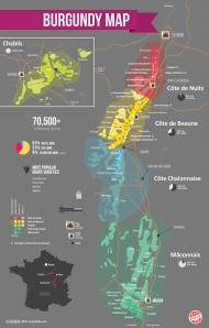 Bourgogne wine region by Wine Folly