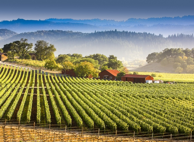 napa-valley-by-huffingtonpost