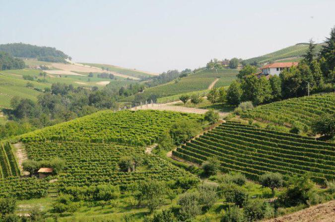 montaribaldi-vineyards-2