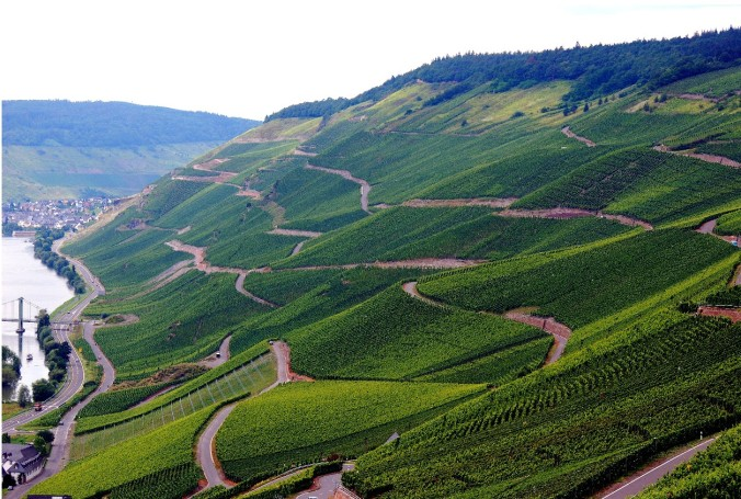 mosel-vineyards